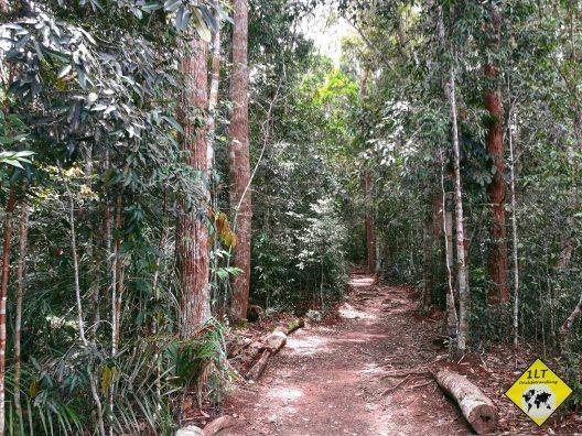 Taman Negara Rainforest